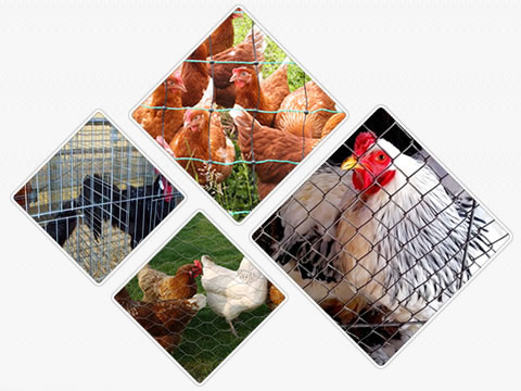 Four pictures of welded wire chicken cage, hexagonal wire chicken cage, chain link chicken cage and plastic poultry netting.