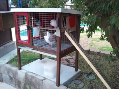 The cage is made of wood and wire mesh, a slide ramp lays down the door and two pigeons in the cage.