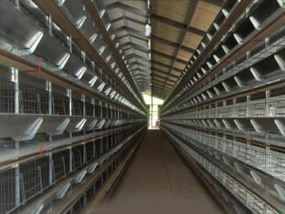 Here is two sides appearance shown to us in the chicken farm, but just the empty cages.